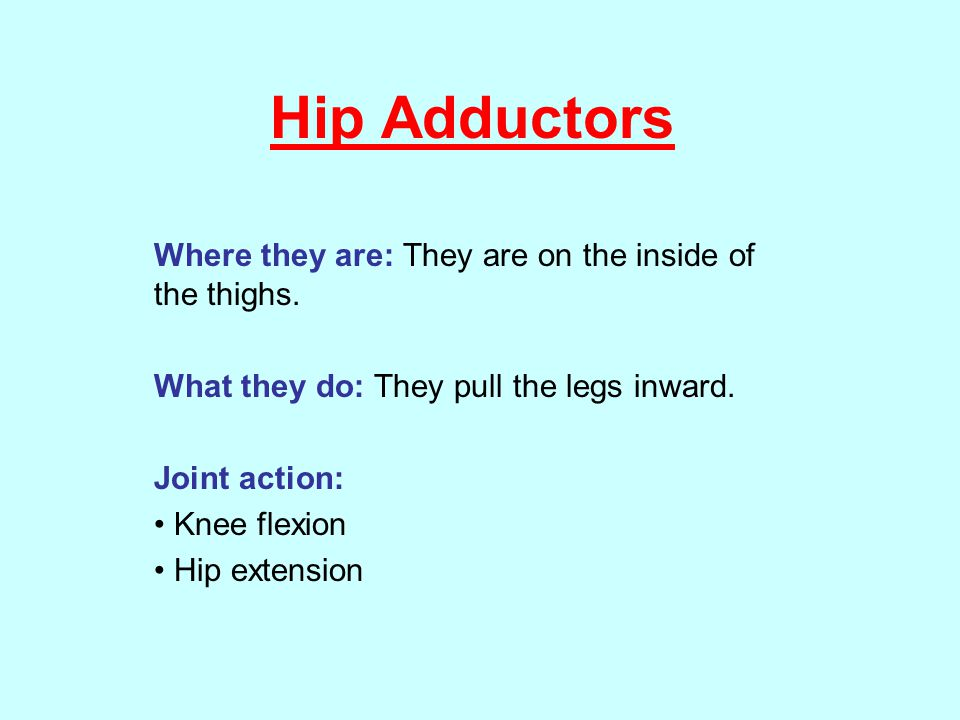 Hip Adductors Where they are: They are on the inside of the thighs.