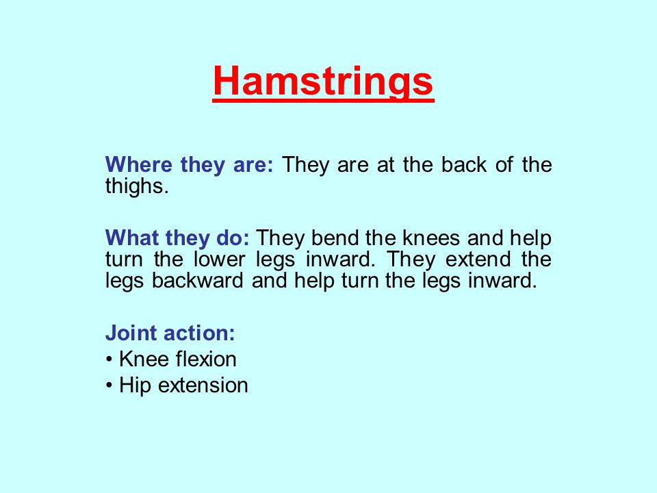 Hamstrings Where they are: They are at the back of the thighs.