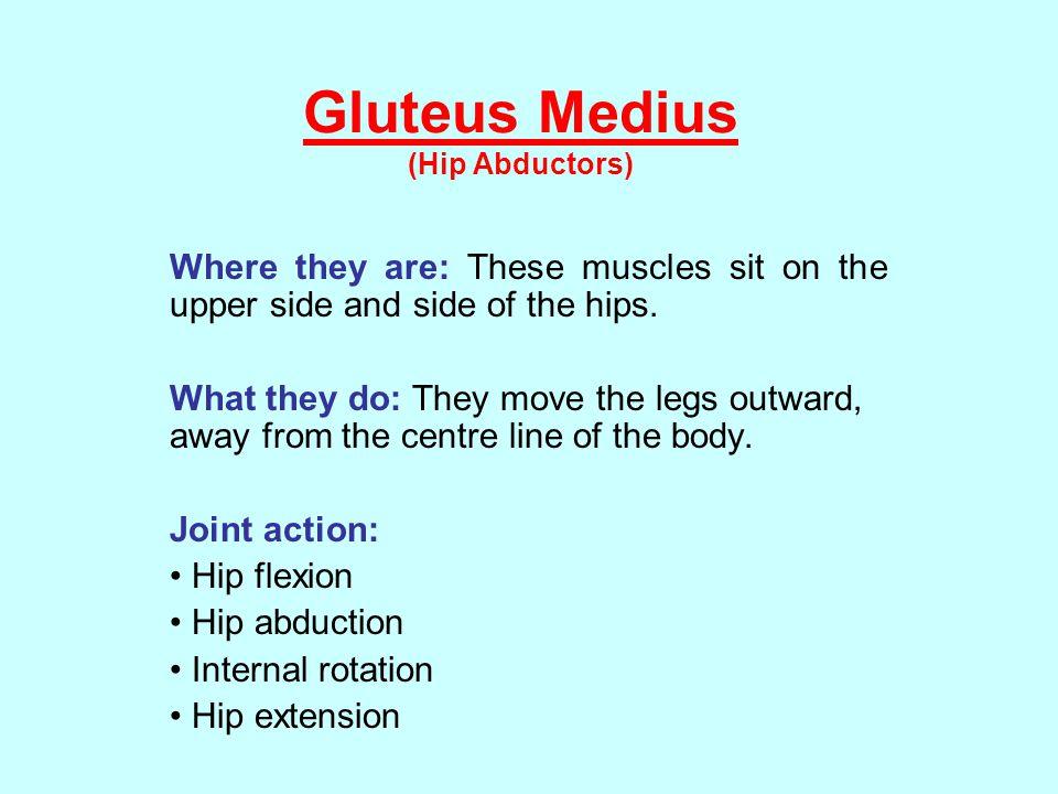 Gluteus Medius (Hip Abductors)