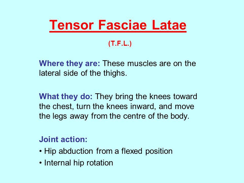 Tensor Fasciae Latae (T.F.L.)