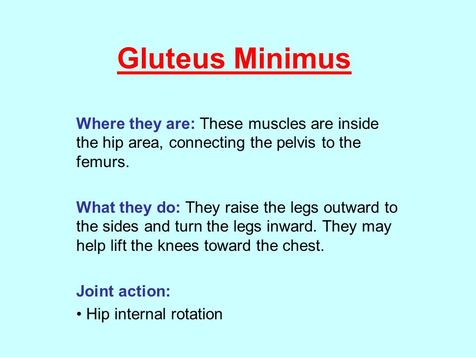 Gluteus Minimus Where they are: These muscles are inside the hip area, connecting the pelvis to the femurs.