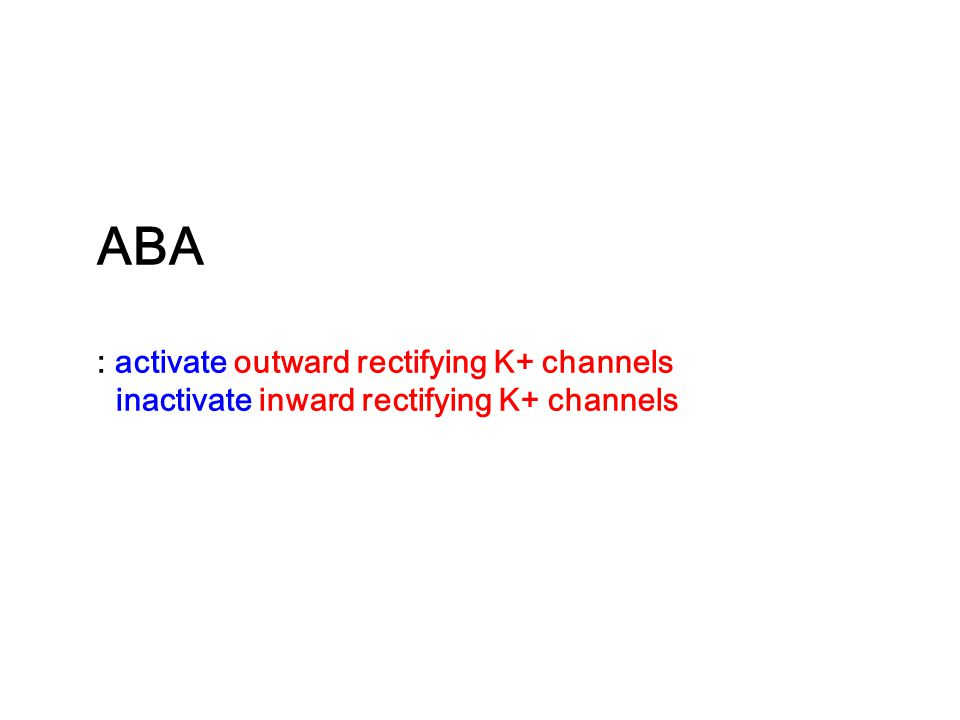 ABA : activate outward rectifying K+ channels