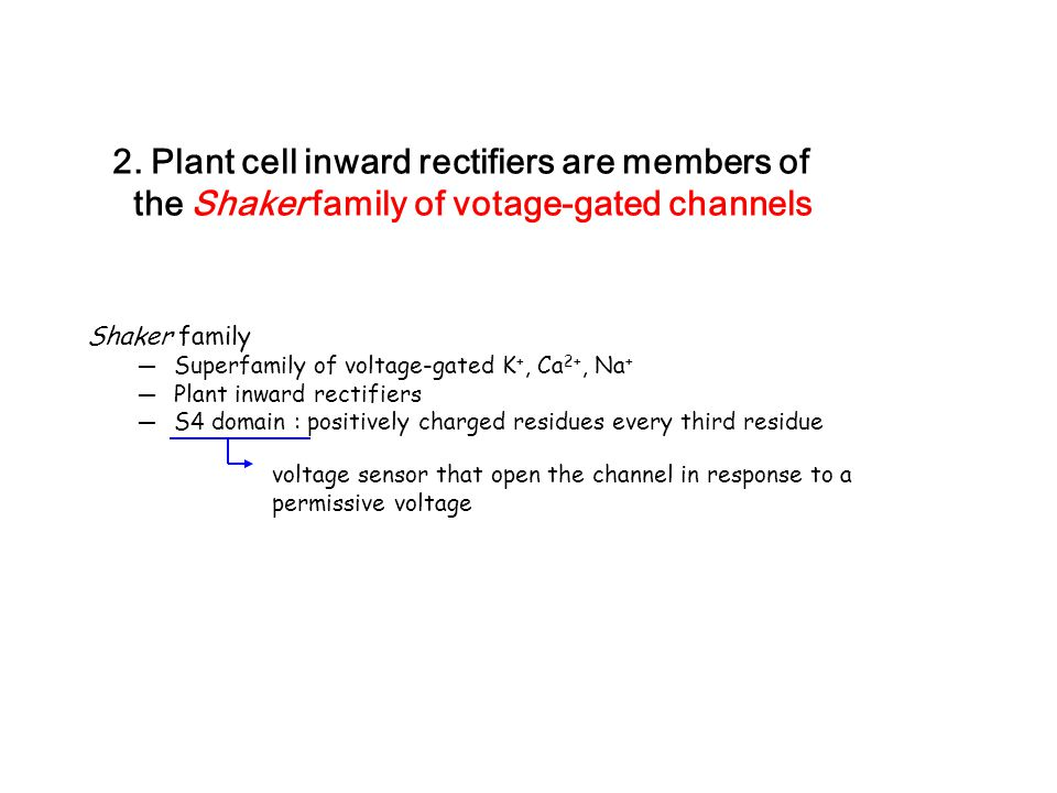 2. Plant cell inward rectifiers are members of