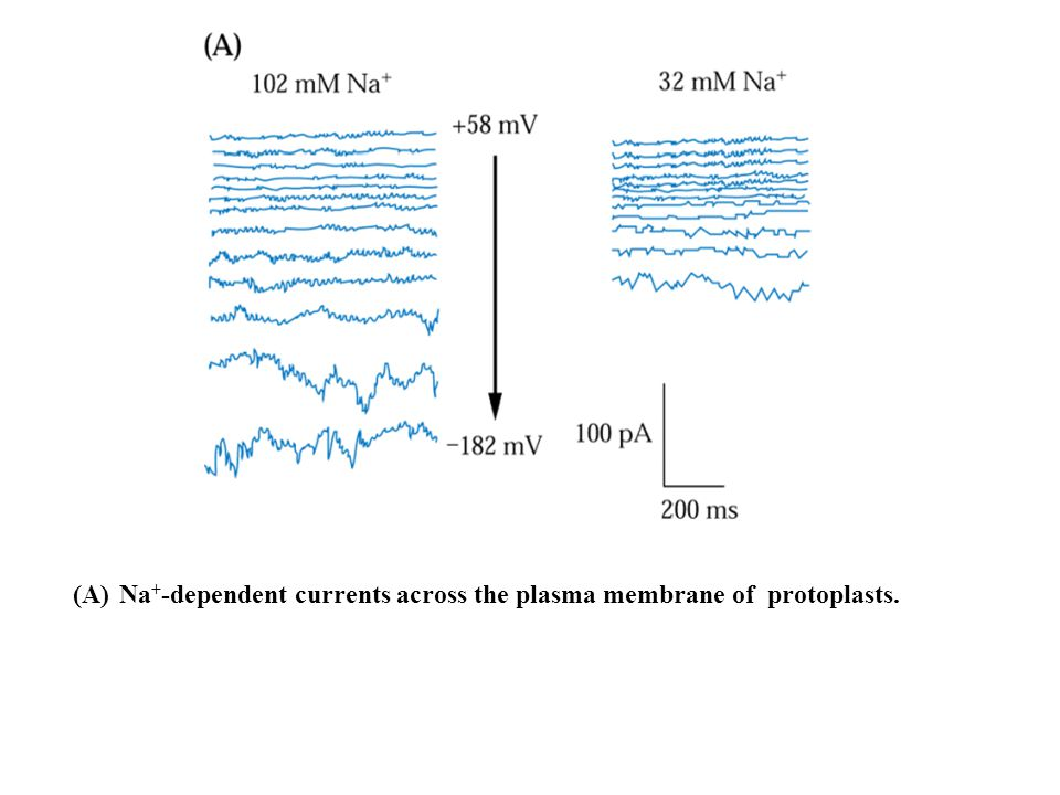 Na+-dependent currents across the plasma membrane of protoplasts.