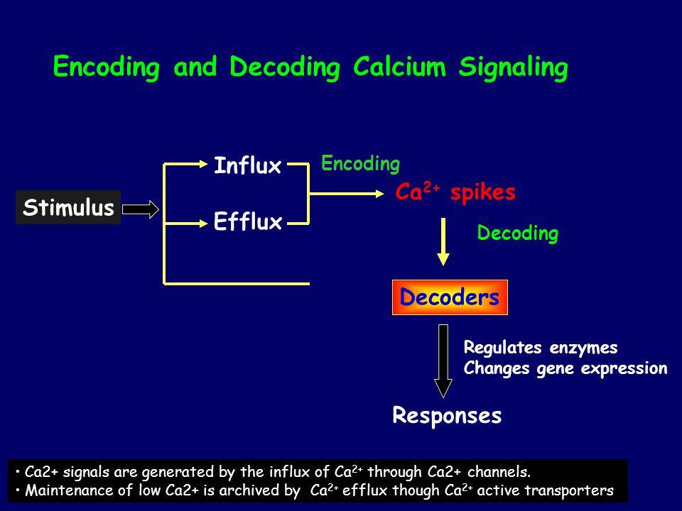 Encoding and Decoding Calcium Signaling