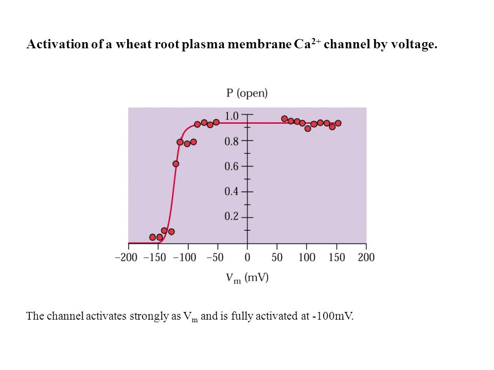 Activation of a wheat root plasma membrane Ca2+ channel by voltage.