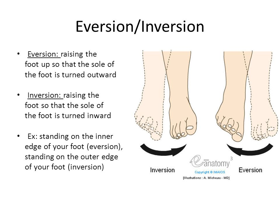 Eversion/Inversion Eversion: raising the foot up so that the sole of