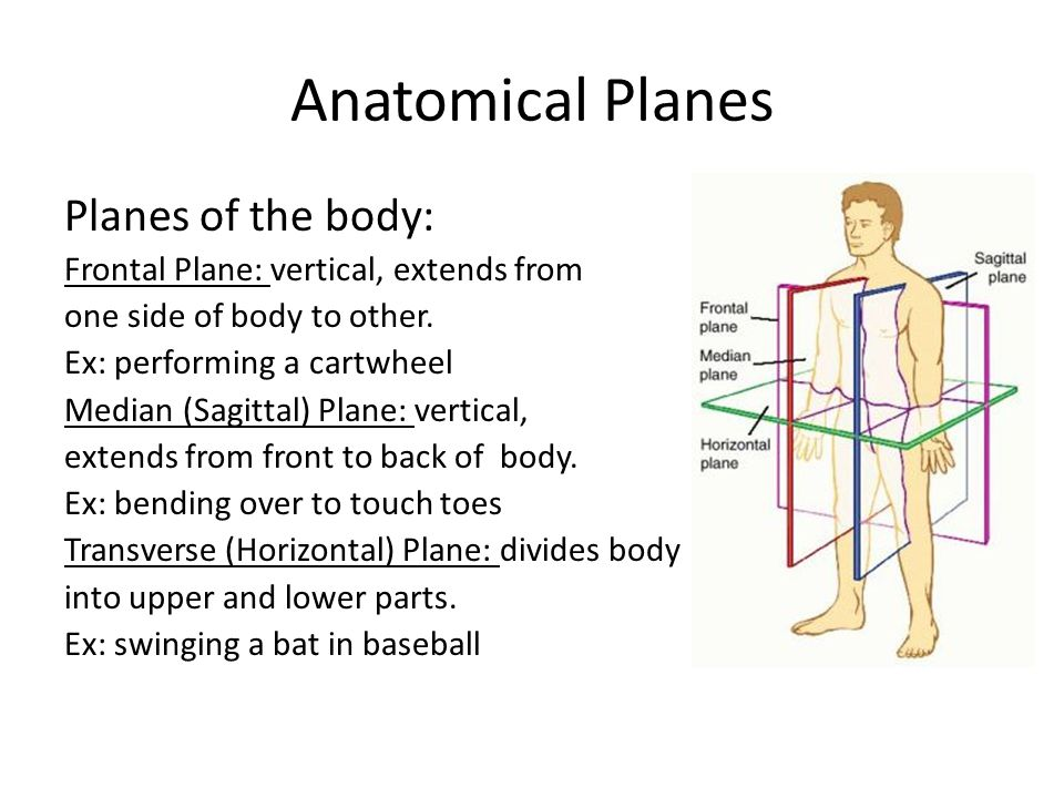 Anatomical Planes Planes of the body: