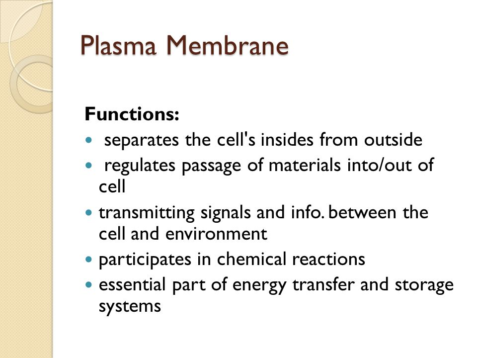 Plasma Membrane Functions: separates the cell s insides from outside