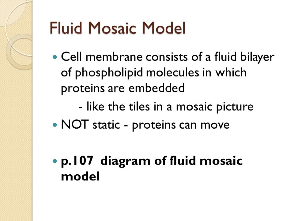 Fluid Mosaic Model Cell membrane consists of a fluid bilayer of phospholipid molecules in which proteins are embedded.