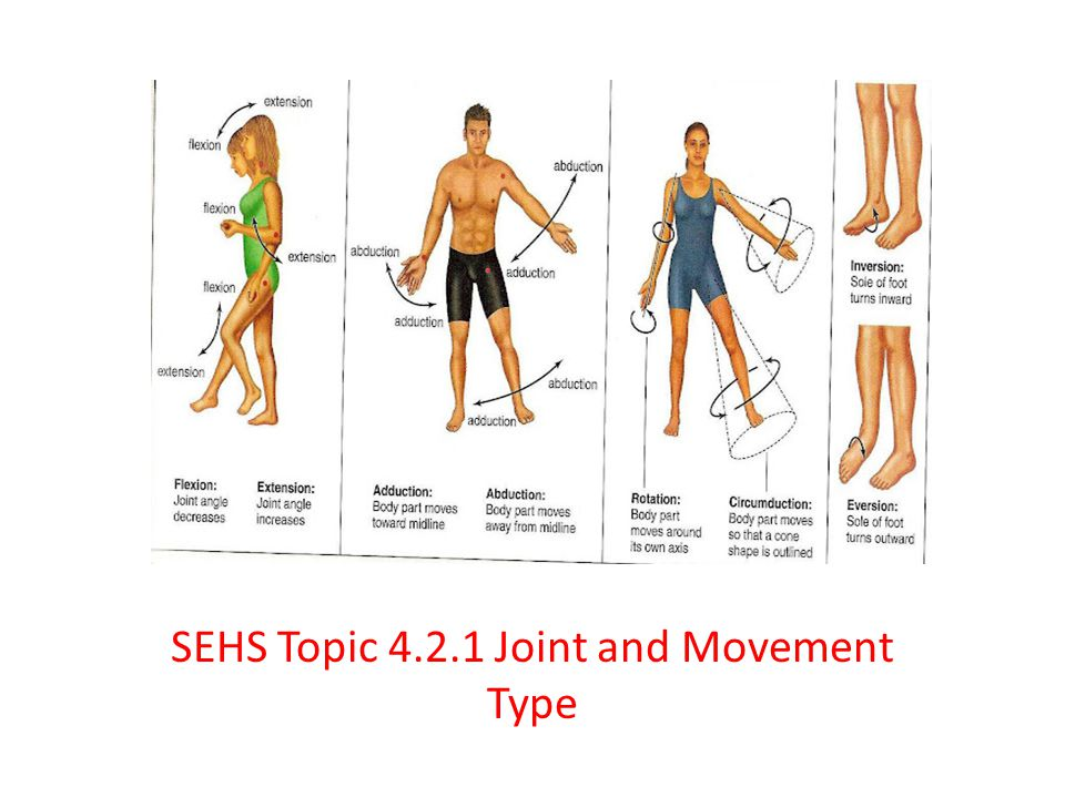 SEHS Topic 4.2.1 Joint and Movement Type