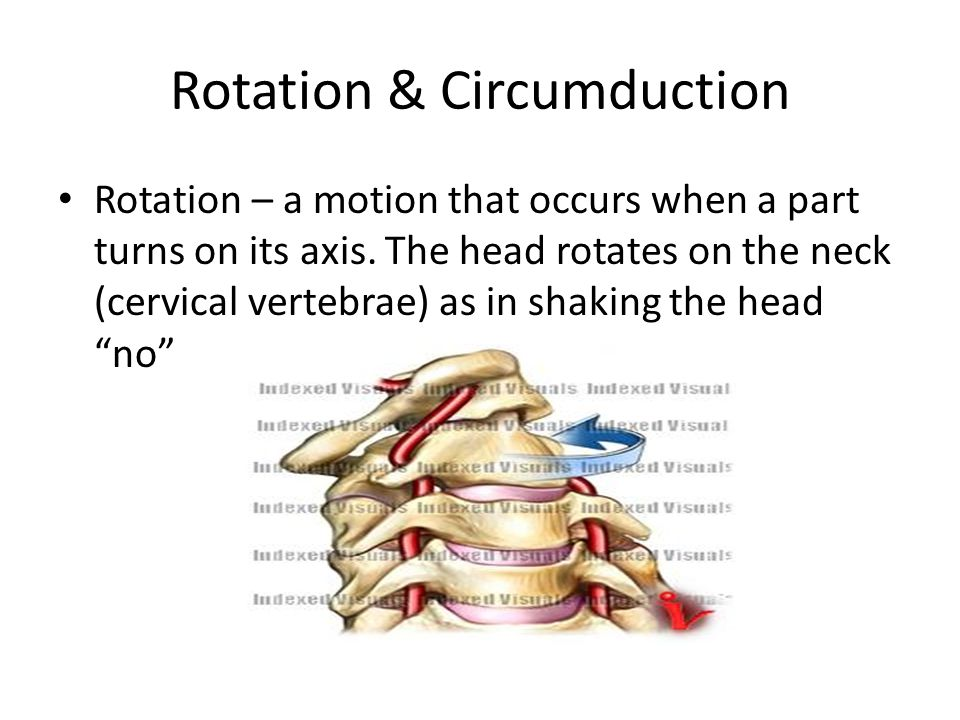 Rotation & Circumduction