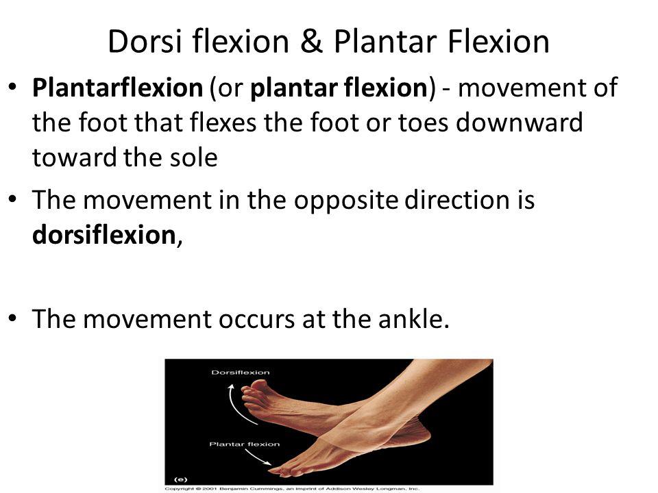 Dorsi flexion & Plantar Flexion