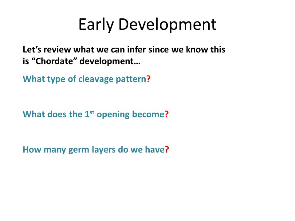 Early Development Let's review what we can infer since we know this is Chordate development… What type of cleavage pattern