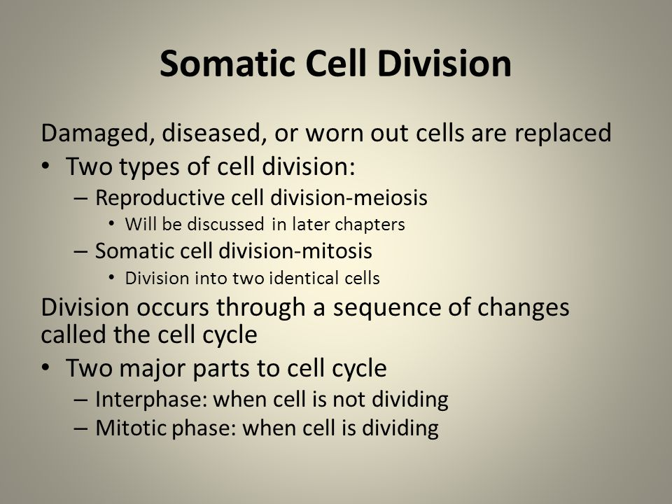 Somatic Cell Division Damaged, diseased, or worn out cells are replaced. Two types of cell division: