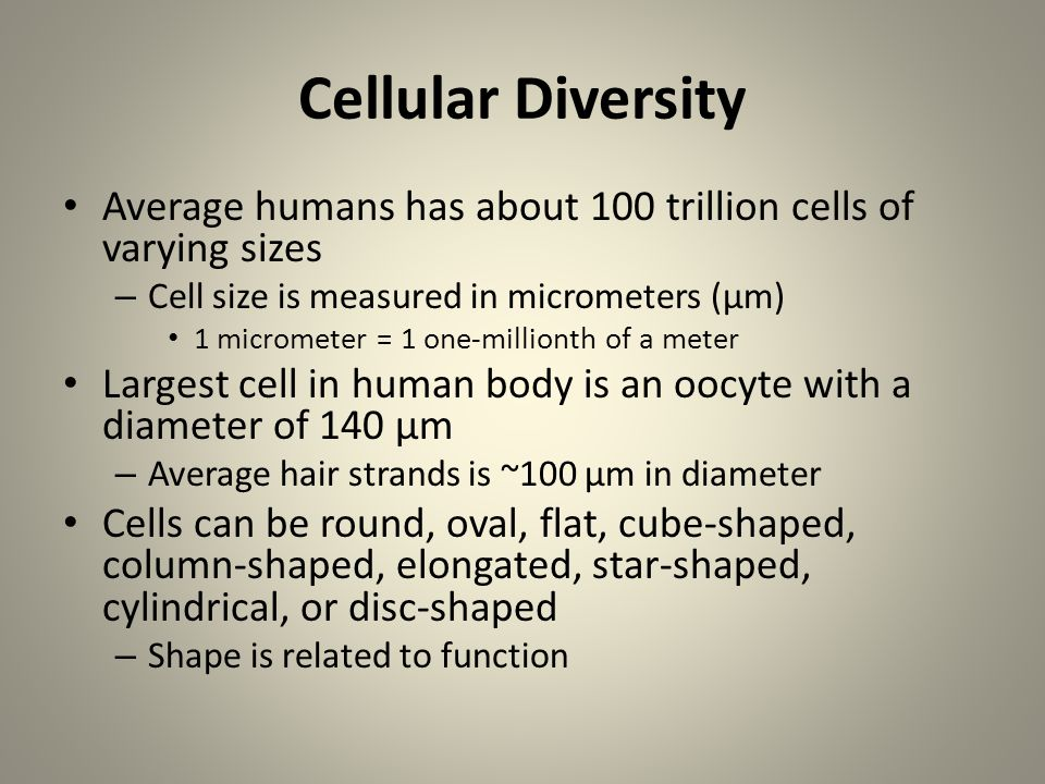 Cellular Diversity Average humans has about 100 trillion cells of varying sizes. Cell size is measured in micrometers (µm)