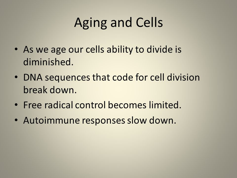 Aging and Cells As we age our cells ability to divide is diminished.