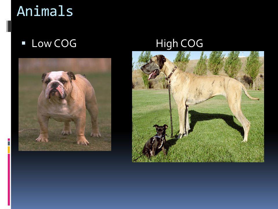Animals Low COG High COG