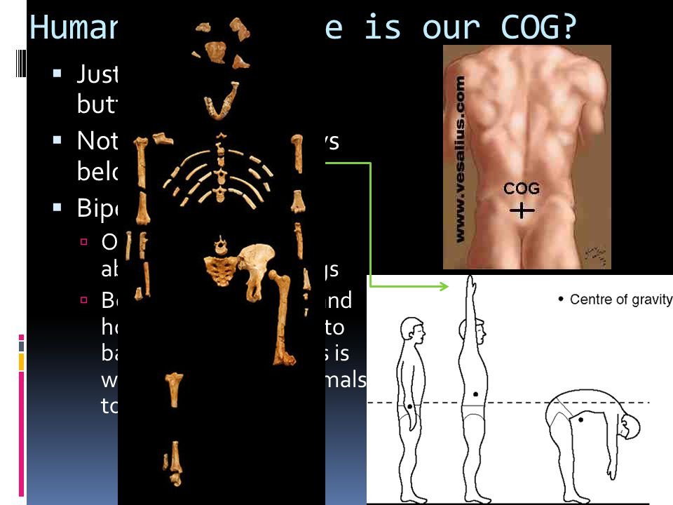 Humans - Where is our COG
