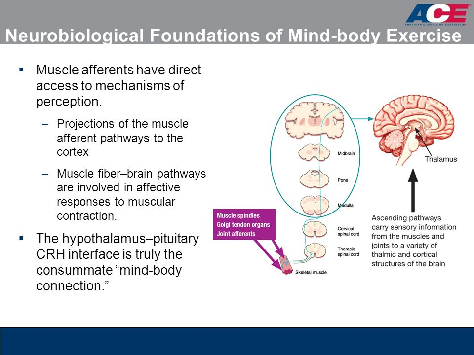 Neurobiological Foundations of Mind-body Exercise