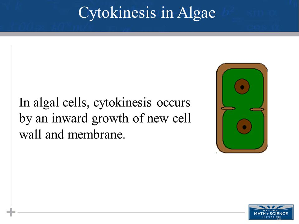 Cytokinesis in Algae In algal cells, cytokinesis occurs by an inward growth of new cell wall and membrane.
