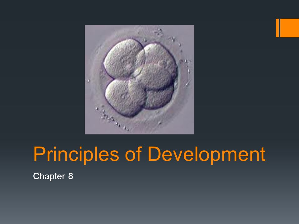 principles of development Here is the best resource for homework help with dep 2004 : principles of development at florida gulf coast university find dep2004 study guides, notes, and.