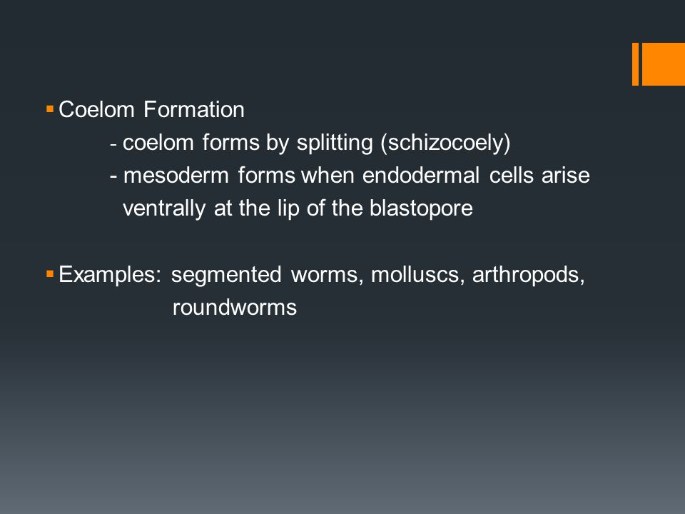 - mesoderm forms when endodermal cells arise
