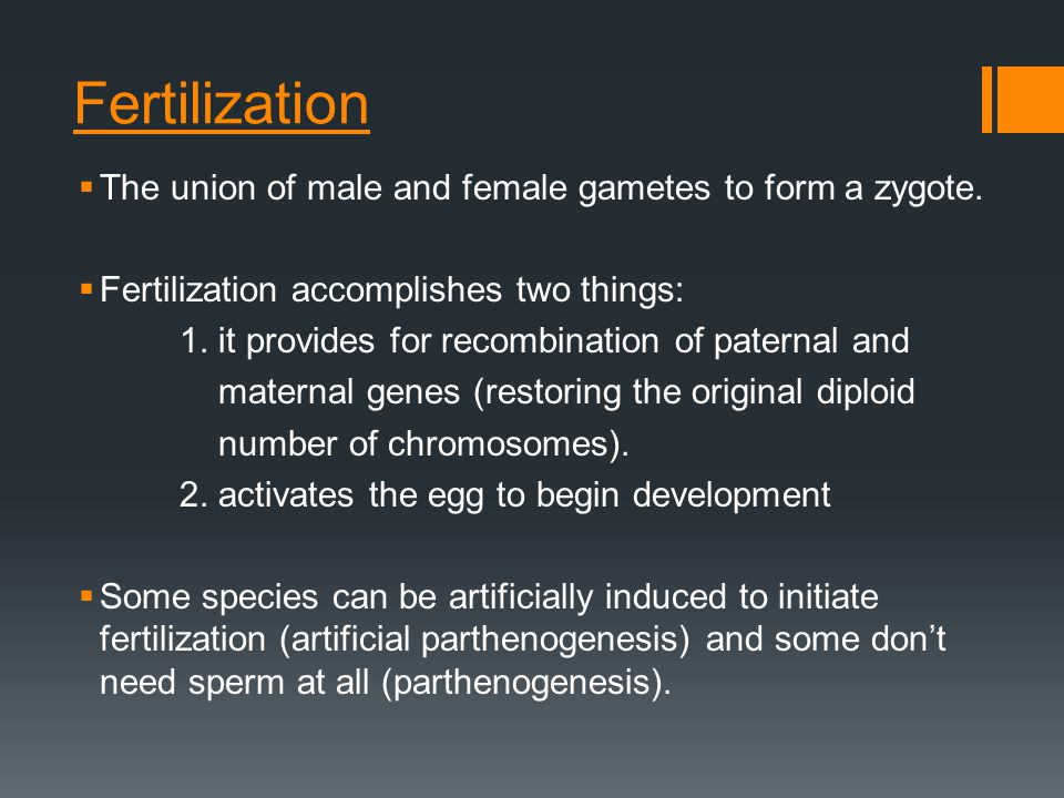 Fertilization The union of male and female gametes to form a zygote.