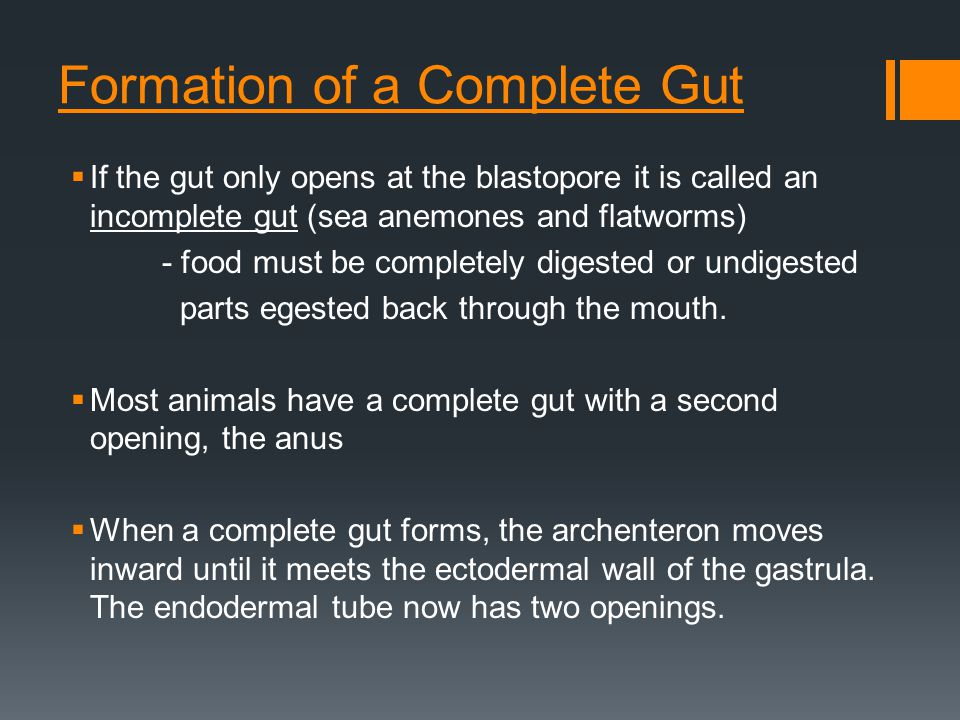 Formation of a Complete Gut