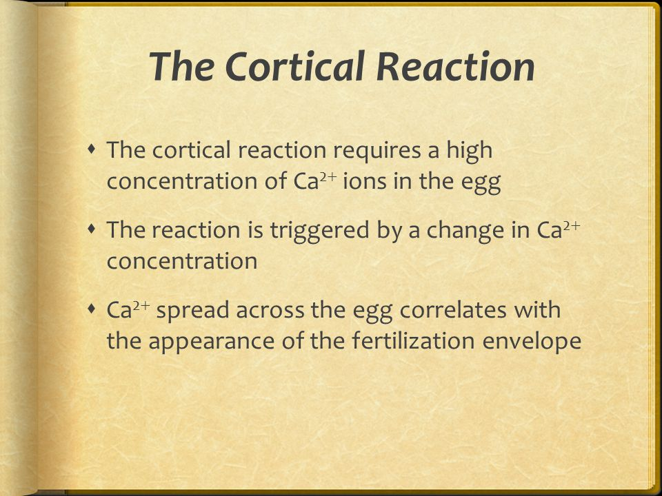 The Cortical Reaction The cortical reaction requires a high concentration of Ca2 ions in the egg.