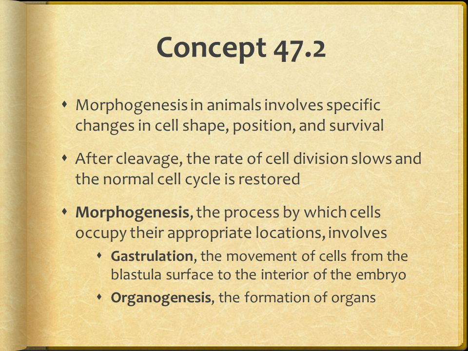 Concept 47.2 Morphogenesis in animals involves specific changes in cell shape, position, and survival.