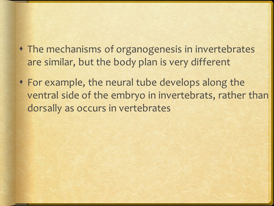 The mechanisms of organogenesis in invertebrates are similar, but the body plan is very different