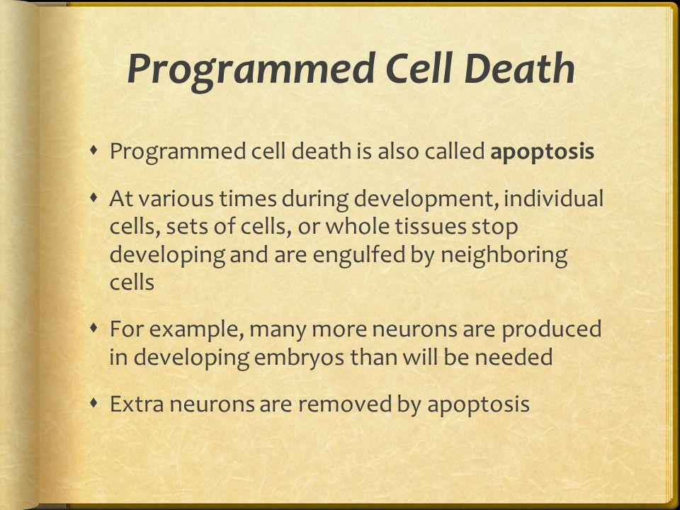 Programmed Cell Death Programmed cell death is also called apoptosis