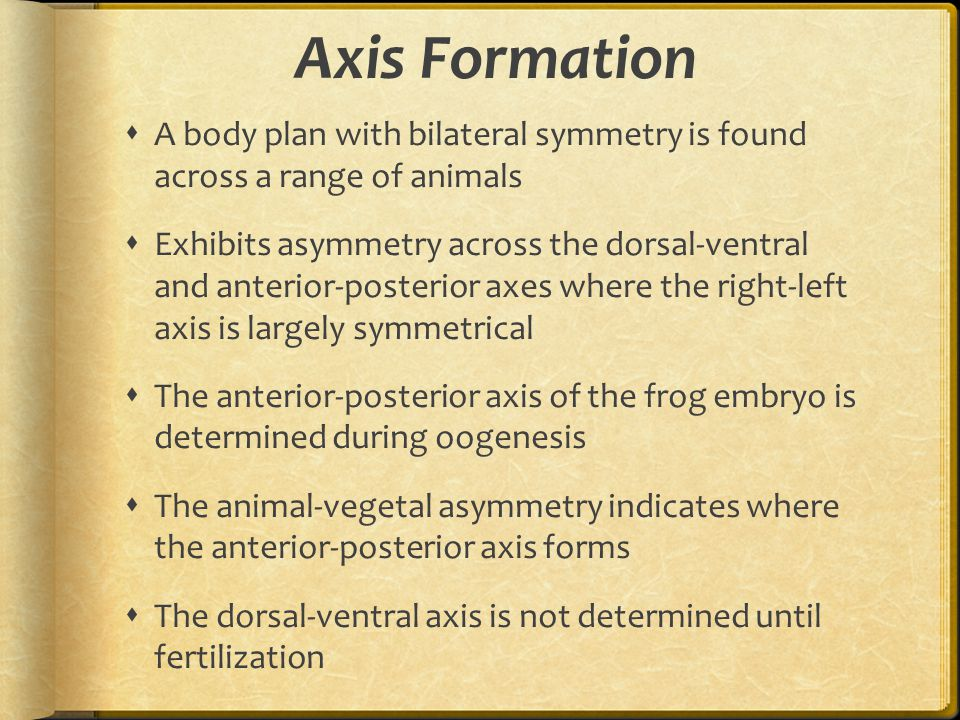 Axis Formation A body plan with bilateral symmetry is found across a range of animals.