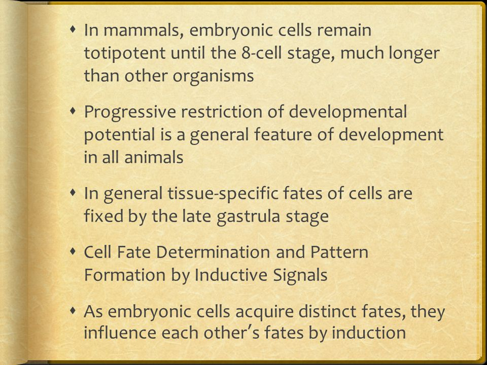 In mammals, embryonic cells remain totipotent until the 8-cell stage, much longer than other organisms