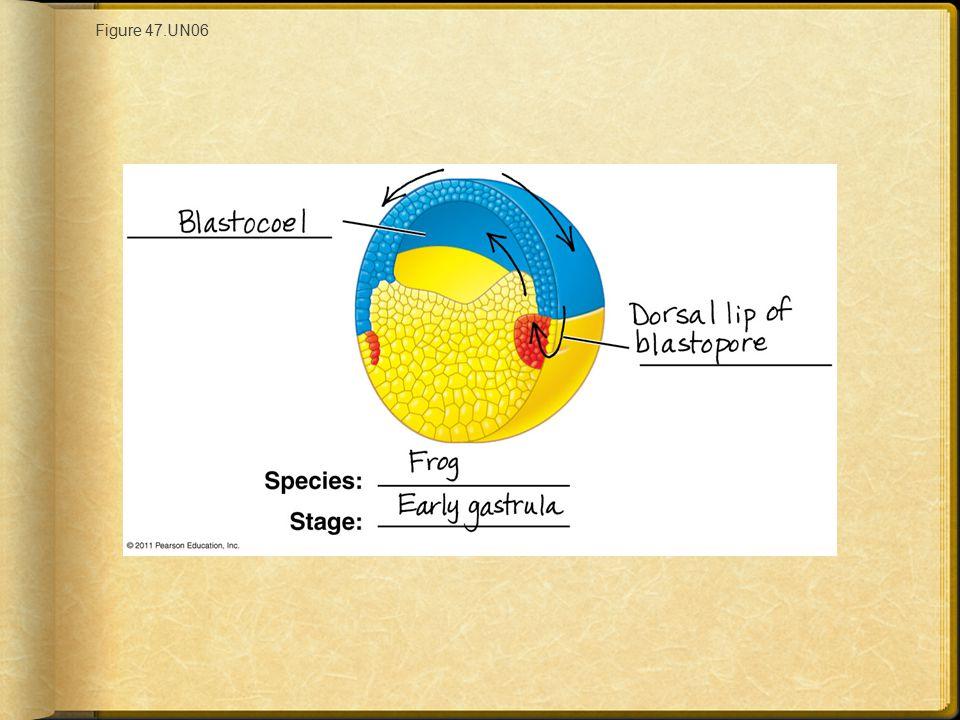 Figure 47.UN06 Figure 47.UN06 Appendix A: answer to Test Your Understanding, question 8