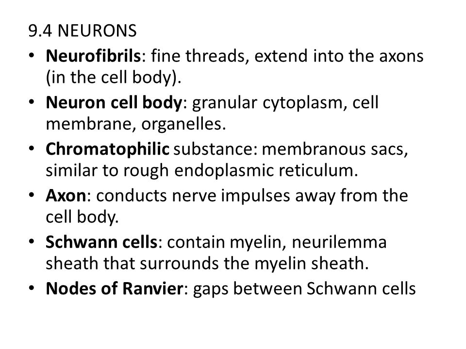 9.4 NEURONS Neurofibrils: fine threads, extend into the axons (in the cell body). Neuron cell body: granular cytoplasm, cell membrane, organelles.