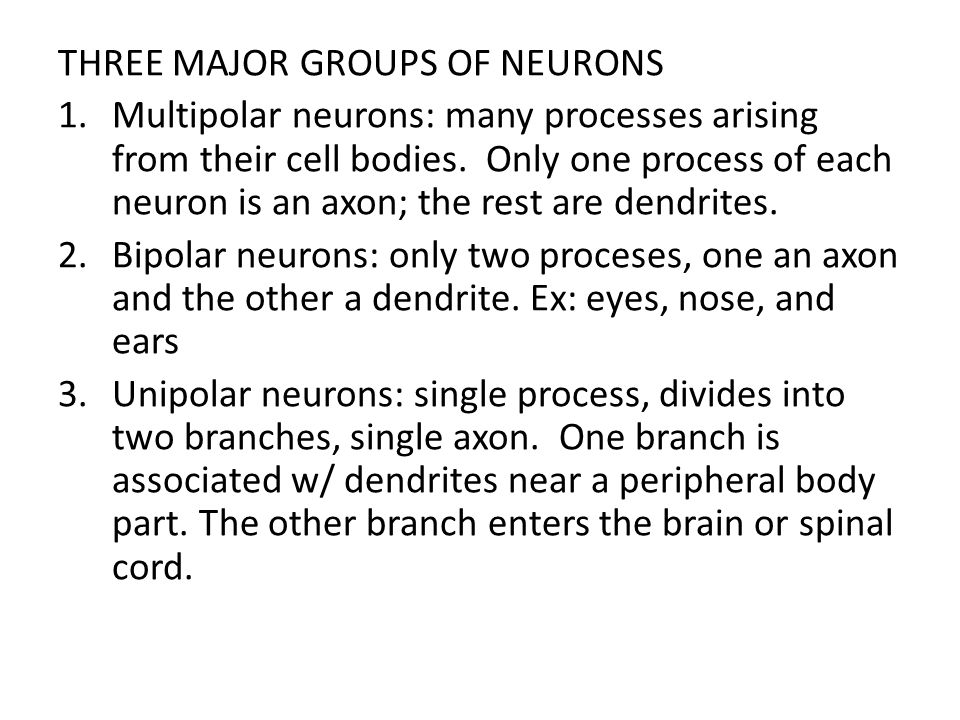 THREE MAJOR GROUPS OF NEURONS