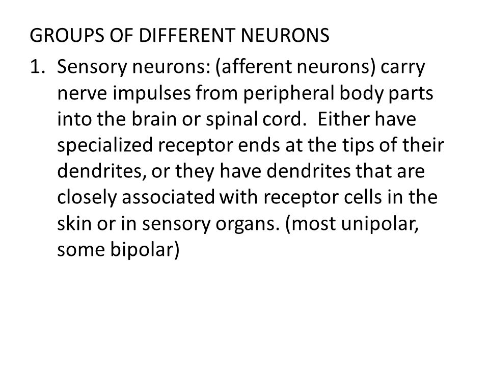 GROUPS OF DIFFERENT NEURONS