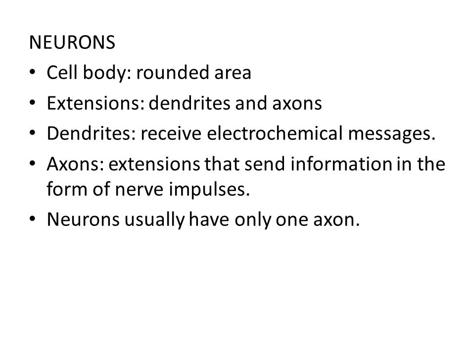 NEURONS Cell body: rounded area. Extensions: dendrites and axons. Dendrites: receive electrochemical messages.