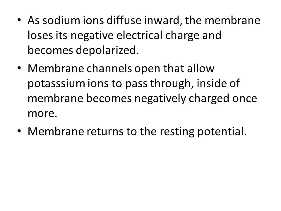 As sodium ions diffuse inward, the membrane loses its negative electrical charge and becomes depolarized.