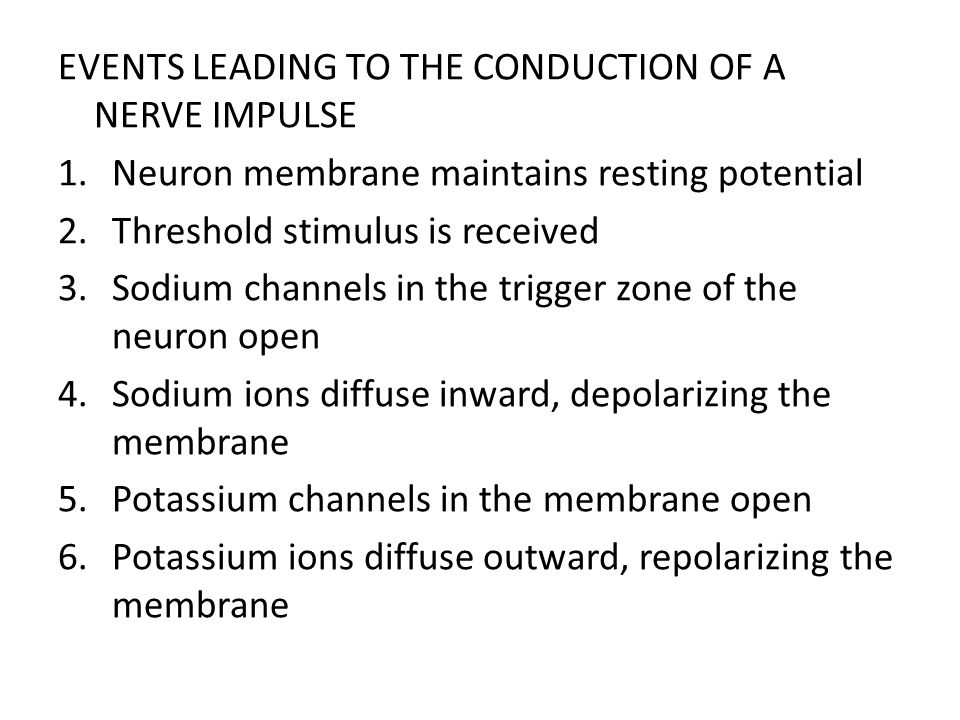 EVENTS LEADING TO THE CONDUCTION OF A NERVE IMPULSE