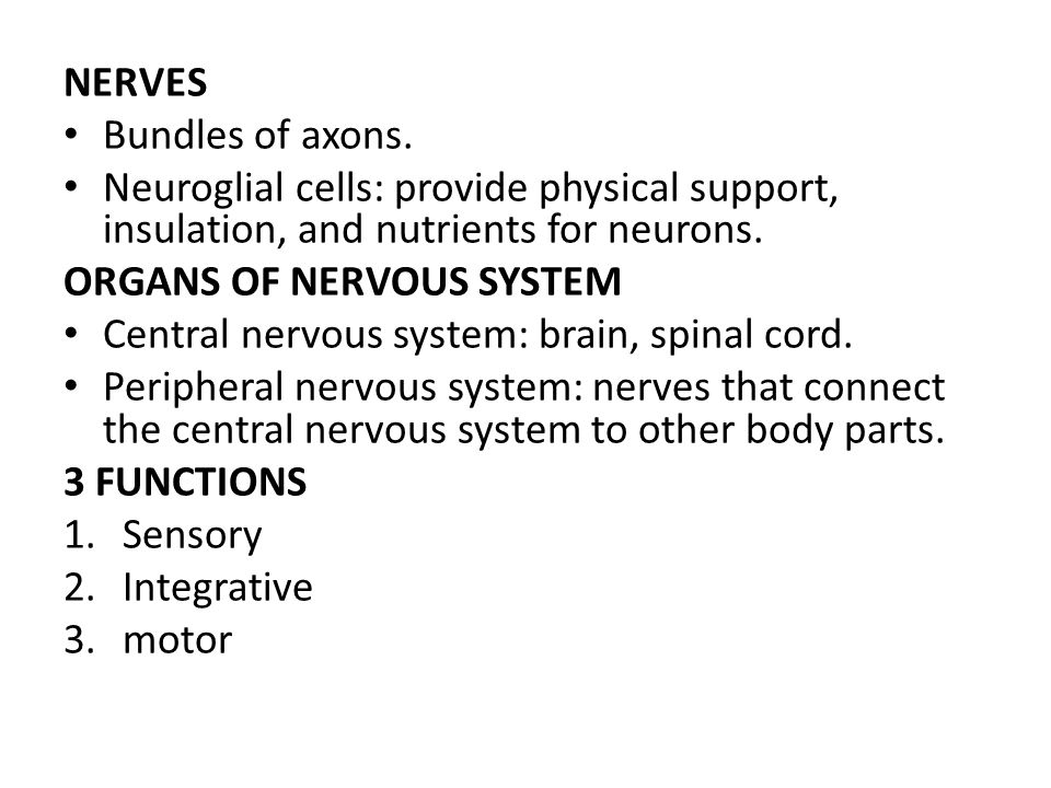 NERVES Bundles of axons. Neuroglial cells: provide physical support, insulation, and nutrients for neurons.