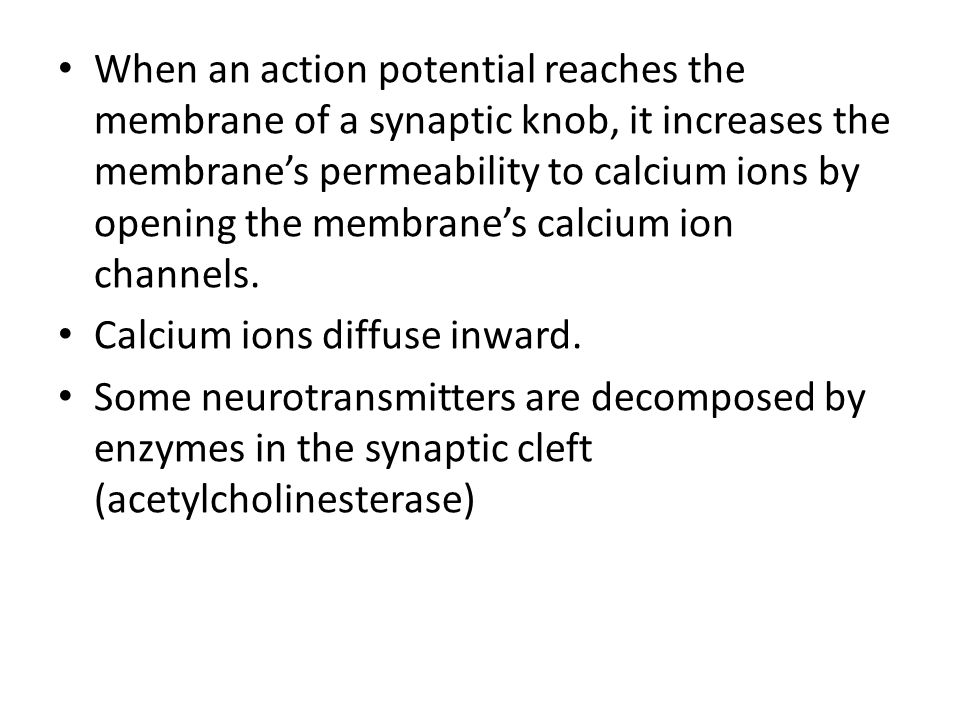 When an action potential reaches the membrane of a synaptic knob, it increases the membrane's permeability to calcium ions by opening the membrane's calcium ion channels.