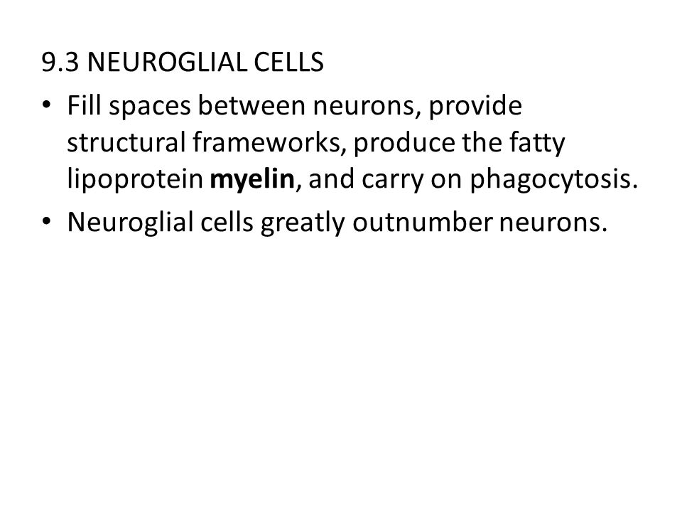 9.3 NEUROGLIAL CELLS Fill spaces between neurons, provide structural frameworks, produce the fatty lipoprotein myelin, and carry on phagocytosis.