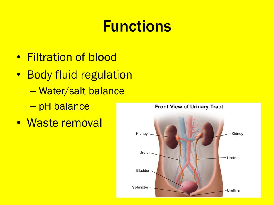 Functions Filtration of blood Body fluid regulation Waste removal