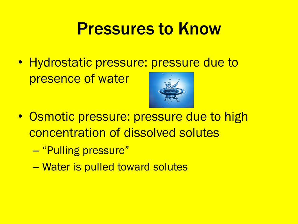Pressures to Know Hydrostatic pressure: pressure due to presence of water. Osmotic pressure: pressure due to high concentration of dissolved solutes.
