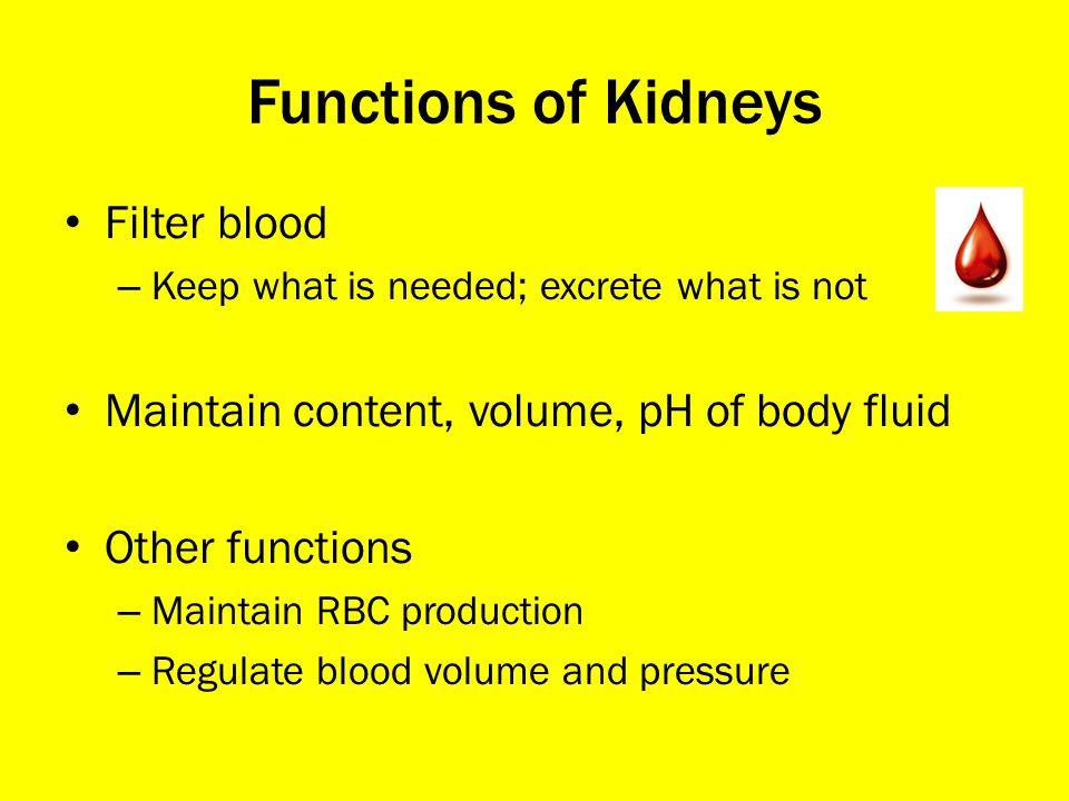 Functions of Kidneys Filter blood
