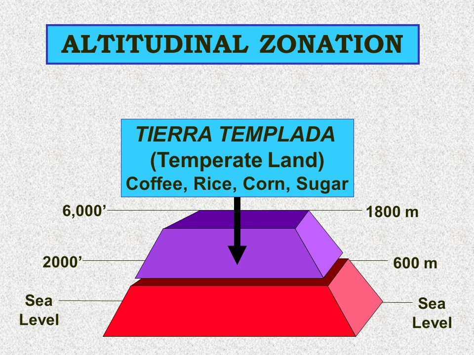 ALTITUDINAL ZONATION TIERRA TEMPLADA (Temperate Land)