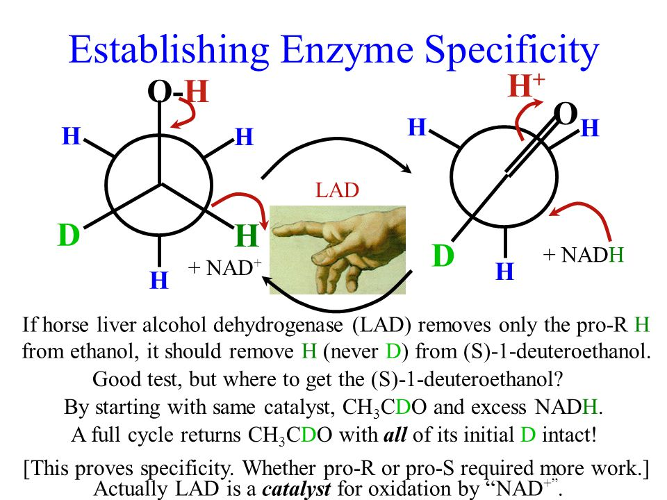 Establishing Enzyme Specificity